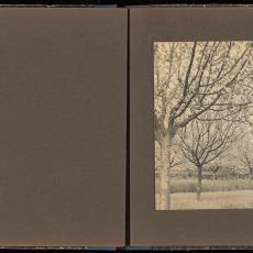 Boomgaard met fruitbomen vol bloesems - onbekend, Pictura (fotografie)