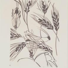 Ontwerptekening reeks 'Multifesta' met dessin van korenhalmen en sprinkhanen - Frans Dijkmeijer, Donders, Camiel, Donders, Camiel, Weverij De Ploeg (Bergeijk)