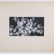 'Natte planten in de winter' - Lange, Tommy de, Pieter Wiegersma