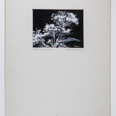 'Les Ombelles I' - Pieter Wiegersma, Lange, Tommy de