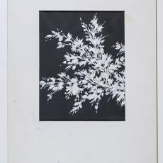 'Welde der natuur' - Lange, Tommy de, Pieter Wiegersma